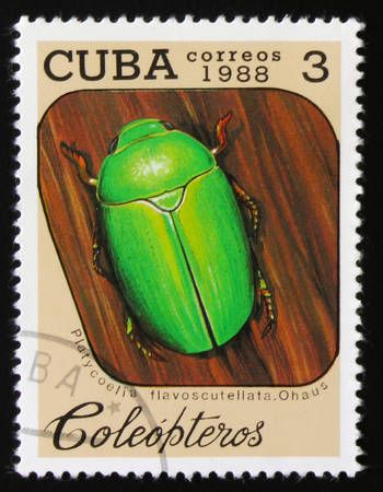MOSCOW, RUSSIA - FEBRUARY 19, 2017: A stamp printed by Cuba shows Beetle Platycoelia flavoscutellata, Ohaus, series beetles, circa 1988 Editorial