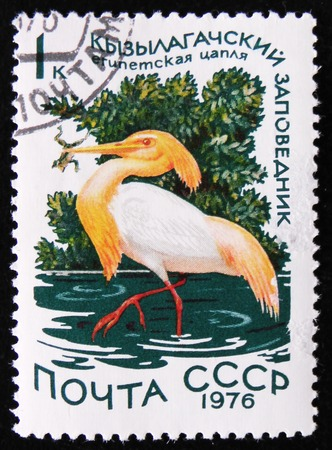 estampilla: MOSCOW, RUSSIA - APRIL 2, 2017: A stamp printed by the Soviet Union Post is devoted to national reserves. It shows a cattle egret (Bubulcus ibis) in the Qizil-Aghaj State Reserve, circa 1976