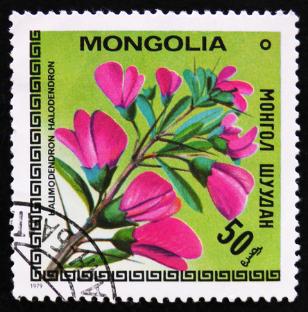 estampilla: MOSCOW, RUSSIA - APRIL 2, 2017: A post stamp printed in Mongolia shows image flowers with the inscription Halimodendron halodendron, circa 1979