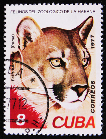 estampilla: MOSCOW, RUSSIA - APRIL 2, 2017: A Stamp printed in Cuba shows image of a Felis concolor, Puma, Mountain Lion, circa 1977 Editorial