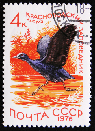 estampilla: MOSCOW, RUSSIA - APRIL 2, 2017: A stamp printed by the Soviet Union Post is devoted to national reserves. It shows a coot (Fulica atra) dwelling in the Krasnovodsky reserve, circa 1976