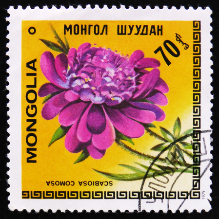 estampilla: MOSCOW, RUSSIA - APRIL 2, 2017: A post stamp printed in Mongolia shows image flowers with the inscription Scabiosa comosa, circa 1979