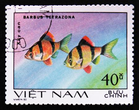 tetrazona: MOSCOW, RUSSIA - APRIL 2, 2017: A post stamp printed in Vietnam, shows fishes Barbus Tetrazona, Ornamental Fish, Aquarium fishes serie, circa 1980