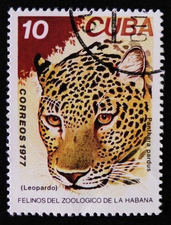 MOSCOW, RUSSIA - APRIL 2, 2017: A post stamp printed in Cuba, shows Panthera pardus, Leopard, series, circa 1977