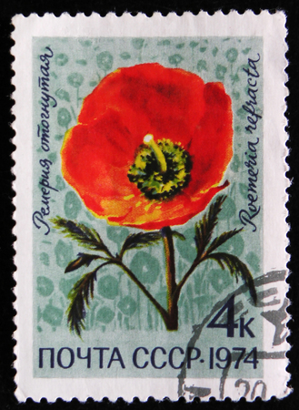 estampilla: MOSCOW, RUSSIA - APRIL 2, 2017: A post stamp printed in USSR shows Roemeria refracta flower, circa 1974 Editorial