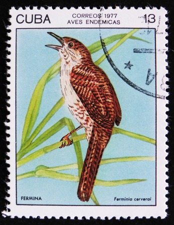 MOSCOW, RUSSIA - APRIL 2, 2017: A post stamp printed in Cuba shows the Bird Fermina or Zapata wren (Ferminia cerverai), stamp is from the series, circa 1977 Editorial