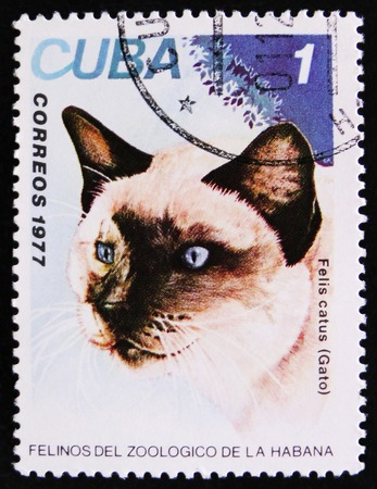 estampilla: MOSCOW, RUSSIA - APRIL 2, 2017: A Stamp printed in Cuba shows image of a Felis catus, Gato, circa 1977