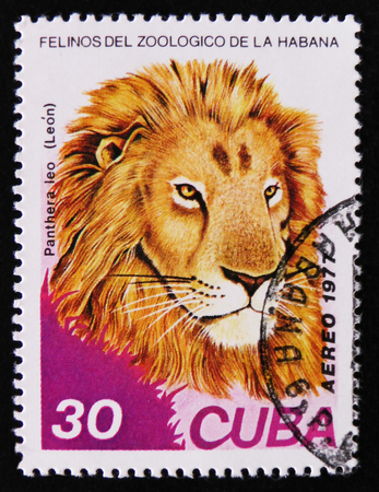 MOSCOW, RUSSIA - APRIL 2, 2017: A post stamp printed in Cuba, shows Panthera leo, series, circa 1977 Editorial