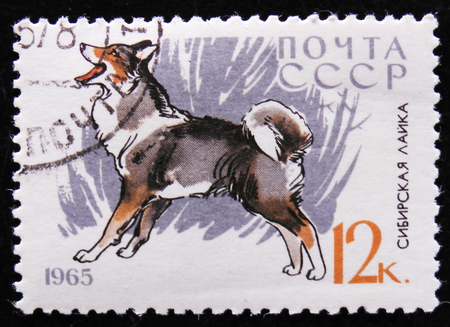 MOSCOW, RUSSIA - APRIL 2, 2017: A post stamp printed in the USSR shows Siberian Husky Editorial
