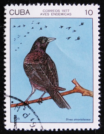 MOSCOW, RUSSIA - APRIL 2, 2017: A post stamp printed in Cuba shows the Cuban blackbird (Dives atroviolaceus), stamp is from the series, circa 1977