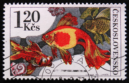 MOSCOW, RUSSIA - APRIL 2, 2017: A post stamp printed in Czechoslovakia shows image of a Goldfishes from the series Tropical aquarium fish, circa 1975 Editorial