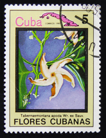 MOSCOW, RUSSIA - APRIL 2, 2017: A post stamp printed in Cuba shows Tabernaemontana apoda, circa 1983