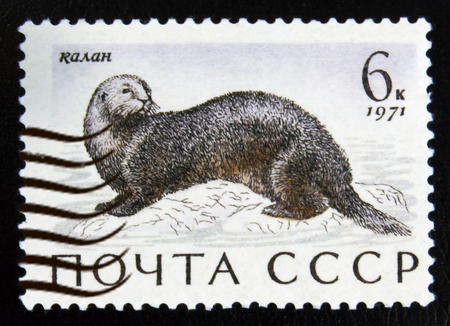MOSCOW, RUSSIA - JULY 15, 2017: A stamp printed in USSR (Russia) shows Sea Otter (Enhydra lutris), Marine Mammals serie, circa 1971