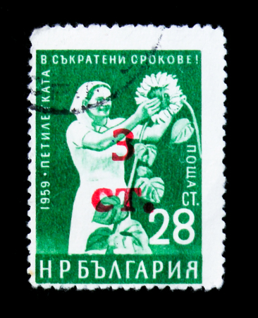 MOSCOW, RUSSIA - JUNE 26, 2017: A stamp printed in Bulgaria shows Woman picking sunflowers, circa 1959 Editorial
