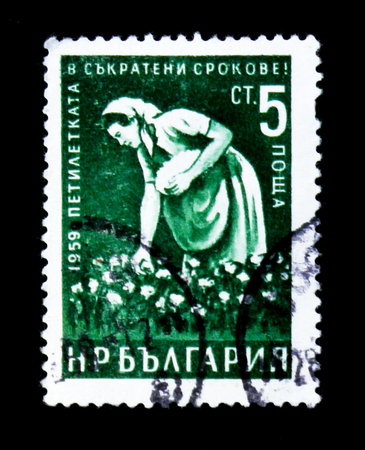 MOSCOW, RUSSIA - JUNE 26, 2017: A stamp printed in Bulgaria shows worker woman cotton picker, early completion of 5 year plan, circa 1959 Editorial