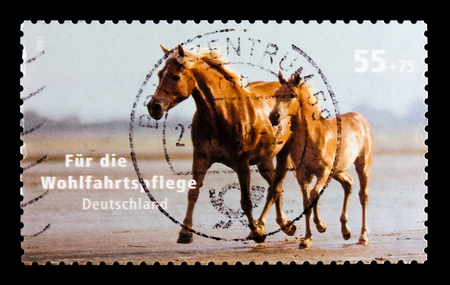 MOSCOW, RUSSIA - OCTOBER 21, 2017: A stamp printed in German Federal Republic shows Horse (Equus ferus caballus), Welfare: Pets serie, circa 2007