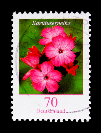 MOSCOW, RUSSIA - OCTOBER 21, 2017: A stamp printed in German Federal republic shows Flowers - Kartausernelke (pink flower), serie, circa 2006
