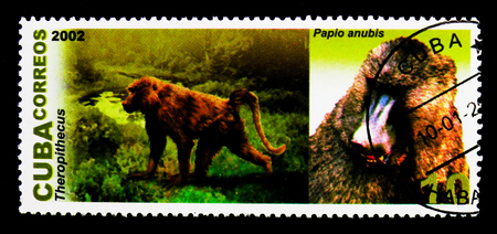 MOSCOW, RUSSIA - NOVEMBER 25, 2017: A stamp printed in Cuba shows Theropithecus, Anubis Baboon (Papio anubis), Prehistoric and Modern Animals serie, circa 2002