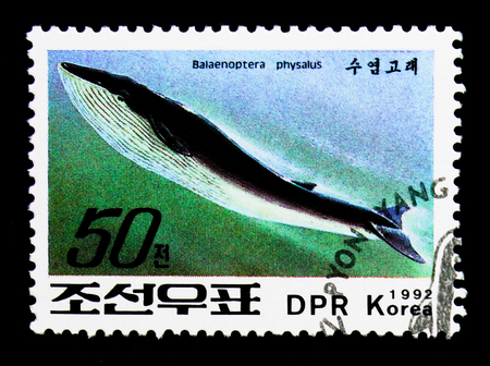 MOSCOW, RUSSIA - NOVEMBER 24, 2017: A stamp printed in Democratic Peoples republic of Korea shows Fin Whale (Balaenoptera physalus), Whales serie, circa 1992
