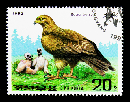 MOSCOW, RUSSIA - NOVEMBER 24, 2017: A stamp printed in Democratic Peoples republic of Korea shows Common Buzzard (Buteo buteo), International Stamp Exhibition GRANADA: Raptors serie, circa 1992 Editorial