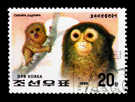 MOSCOW, RUSSIA - NOVEMBER 24, 2017: A stamp printed in Democratic Peoples republic of Korea shows Pygmy Marmoset (Cebuella pygmaea), Year of the Monkey serie, circa 1992 Editorial