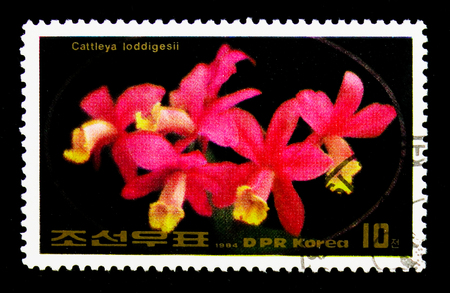 MOSCOW, RUSSIA - NOVEMBER 24, 2017: A stamp printed in Democratic Peoples republic of Korea shows Cattleya loddigesii, Flowers serie, circa 1984 에디토리얼