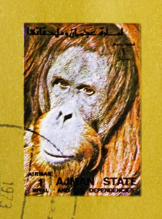 MOSCOW, RUSSIA - NOVEMBER 10, 2018: A stamp printed in Ajman shows Orangutan (Pongo spp.), Animals, big format serie, circa 1973 Editorial