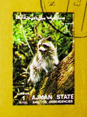 MOSCOW, RUSSIA - NOVEMBER 10, 2018: A stamp printed in Ajman shows Raccoon (Procyon lotor), Animals, big format serie, circa 1973 Stock Photo - 114383194