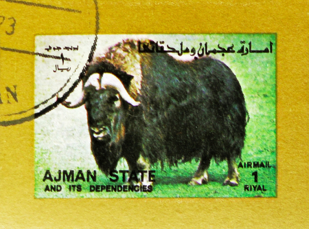 MOSCOW, RUSSIA - NOVEMBER 10, 2018: A stamp printed in Ajman shows Muskox (Ovibos moschatus), Animals, big format serie, circa 1973