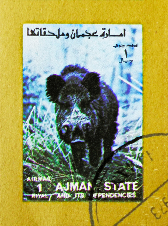 MOSCOW, RUSSIA - NOVEMBER 10, 2018: A stamp printed in Ajman shows Wild Boar (Sus scrofa), Animals, big format serie, circa 1973