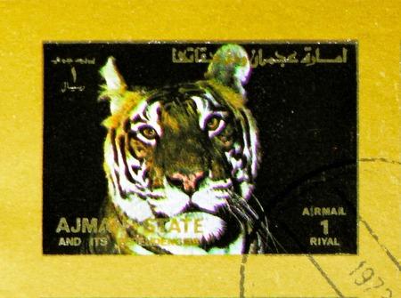 MOSCOW, RUSSIA - NOVEMBER 10, 2018: A stamp printed in Ajman shows Tiger (Panthera tigris), Animals, big format serie, circa 1973