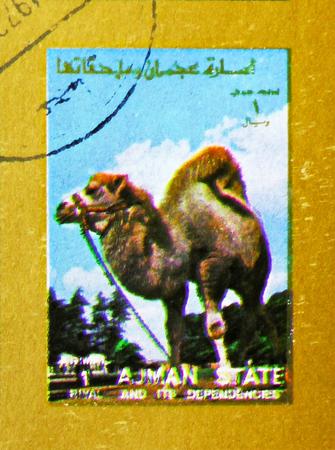 MOSCOW, RUSSIA - NOVEMBER 10, 2018: A stamp printed in Ajman shows Arabian camel (Camelus dromedarius), Animals, big format serie, circa 1973 Stock Photo - 114383201