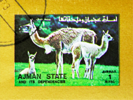 MOSCOW, RUSSIA - NOVEMBER 10, 2018: A stamp printed in Ajman shows Llama (Lama glama), Animals, big format serie, circa 1973 Stock Photo - 114383204