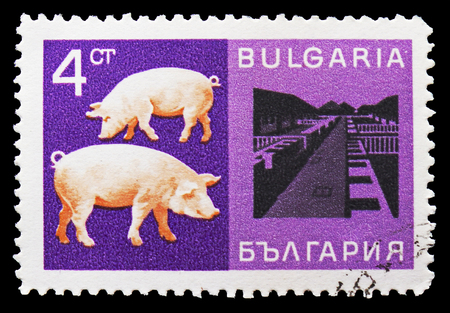 MOSCOW, RUSSIA - SEPTEMBER 15, 2018: A stamp printed in Bulgaria shows Domestic Pig (Sus scrofa domestica), Farm, Economic achievements serie, circa 1967