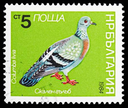 MOSCOW, RUSSIA - OCTOBER 21, 2018: A stamp printed in Bulgaria shows Rock Pigeon (Columba livia), Birds serie, circa 1984 Редакционное