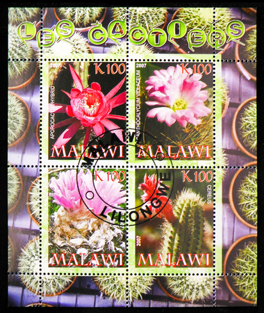 MOSCOW, RUSSIA - OCTOBER 21, 2018: A stamps printed in Malawi shows Cactuses serie, circa 2007