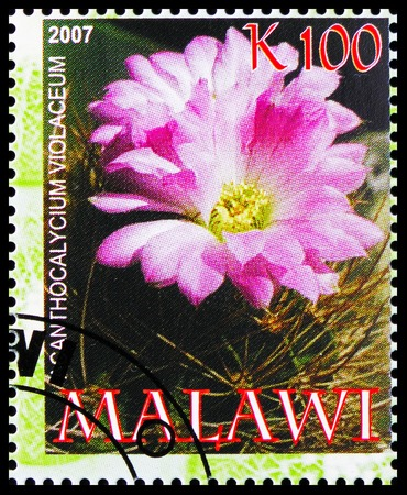 MOSCOW, RUSSIA - OCTOBER 21, 2018: A stamp printed in Malawi shows Icanthocalycium violaceum, Cactuses serie, circa 2007