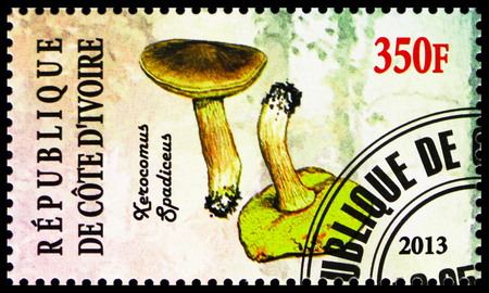 MOSCOW, RUSSIA - OCTOBER 21, 2018: A stamp printed on Ivory Coast shows Xerocomus spadiceus, Mushrooms serie, circa 2013 Редакционное