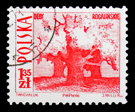 MOSCOW, RUSSIA - SEPTEMBER 15, 2018: A stamp printed in Poland shows Old oaks, Rogalin, Tourist Attractions serie, circa 1966