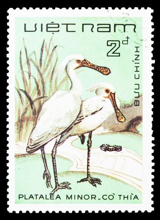 MOSCOW, RUSSIA - SEPTEMBER 26, 2018: A stamp printed in Vietnam shows Black-faced Spoonbill (Platalea minor), Birds serie, circa 1983