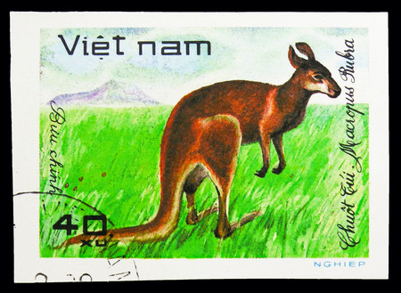 MOSCOW, RUSSIA - SEPTEMBER 26, 2018: A stamp printed in Vietnam shows Red Kangaroo (Macropus rufus), World wild animals serie, circa 1981 Editorial