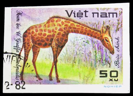 MOSCOW, RUSSIA - SEPTEMBER 26, 2018: A stamp printed in Vietnam shows Giraffe (Giraffa camelopardalis), World wild animals serie, circa 1981 Editorial