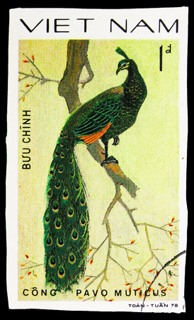 MOSCOW, RUSSIA - SEPTEMBER 26, 2018: A stamp printed in Vietnam shows Green Peafowl (Pavo muticus), Pheasants serie, circa 1979