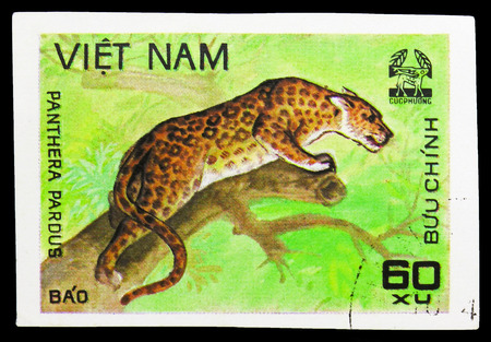 MOSCOW, RUSSIA - SEPTEMBER 26, 2018: A stamp printed in Vietnam shows Leopard (Panthera pardus), Animals from Cuc Phuona Nati Forest serie, circa 1981 新聞圖片