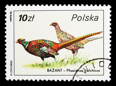 MOSCOW, RUSSIA - SEPTEMBER 15, 2018: A stamp printed in Poland shows Common Pheasant (Phasianus colchicus), Wildlife serie, circa 1986 Sajtókép