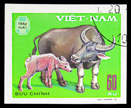 MOSCOW, RUSSIA - SEPTEMBER 26, 2018: A stamp printed in Vietnam shows Domesticated Water Buffalo (Bos bubalus domesticus), Domestic horned animals serie, circa 1979