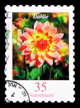 MOSCOW, RUSSIA - JANUARY 4, 2019: A stamp printed in Germany, Federal Republic shows Dahlia variabilis - Dahlia, Flowers serie, circa 2006 Редакционное
