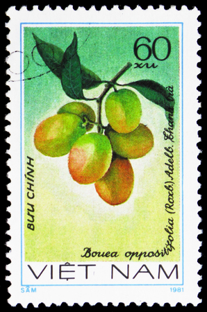 MOSCOW, RUSSIA - JANUARY 4, 2019: A stamp printed in Vietnam shows Bouea oppositifolia, Fruits serie, circa 1981