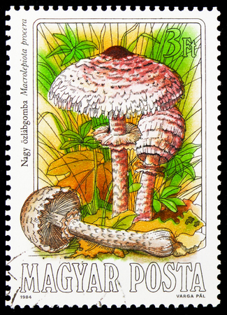 MOSCOW, RUSSIA - JANUARY 4, 2019: A stamp printed in Hungary shows Macrolepiota procera, Mushrooms serie, circa 1984 Editorial