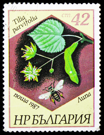 MOSCOW, RUSSIA - JANUARY 4, 2019: A stamp printed in Bulgaria shows Tilia parvifolia, Bees and plants serie, circa 1987 Редакционное